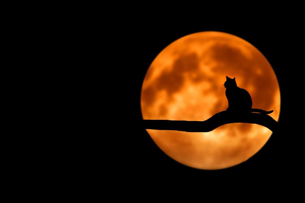Black cat and moon october fun