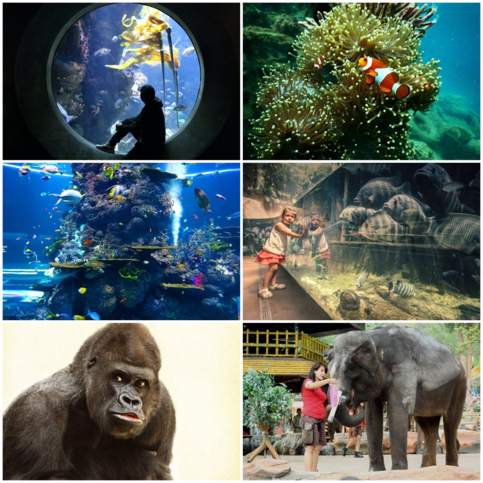 Aquariums and Zoo's