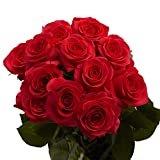 GlobalRose 1 Dozen Red Roses- Fresh Flowers- Fast Delivery  byGlobalRose